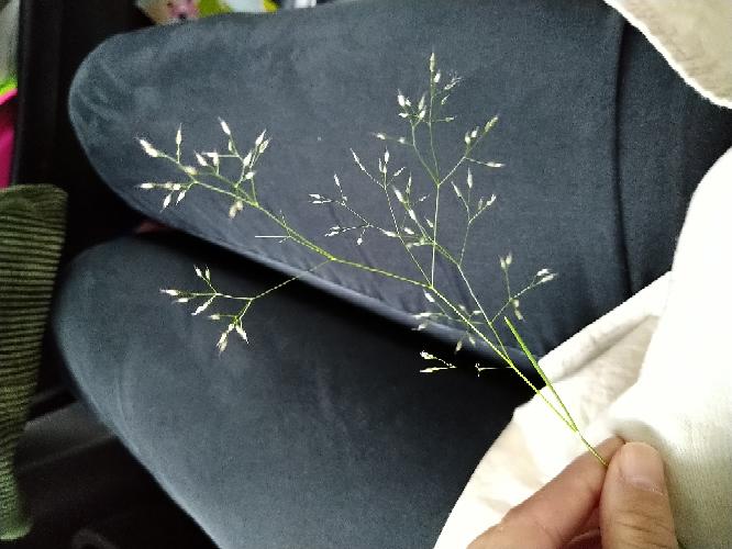 これは何の葉っぱですが?