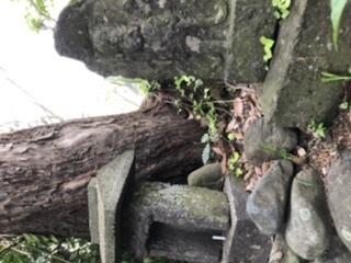 これは三宝荒神ですか?荒神様? の下には鶏と猿が右左にいます。そして、その下にある土台に掘っている文字には、寛政十八年か六年、寅、二月吉日、願成就とあります。そもそもなぜここにあるのかずっと不思議でいます。今は家がこの荒神様?のそばに建ってるので自宅裏にある感じになってます。 80代で亡くなった祖母が言っていたのですが、昔ここの土地は武家屋敷で2号さんを囲っていた所だった、ということは聞いた事はありますが、母が嫁に来た時はうちの土地が竹林に囲まれてて、この荒神様?の近くにはまだ家じゃなく馬小屋があったらしいですが。結婚後に馬小屋を壊して現在の自宅を建てたそうです。とにかく結婚当初母がこちらへ来た時には竹林が鬱蒼とした、ど田舎だったらしいですが。 これが何の為に作られたものかを家族の誰もが知らないままで、、謎です。 普段は何もしないのですが、お盆やお正月にサカキをかえる位のことしかしていません。 どなたかわかるような方いらっしゃいませんか?
