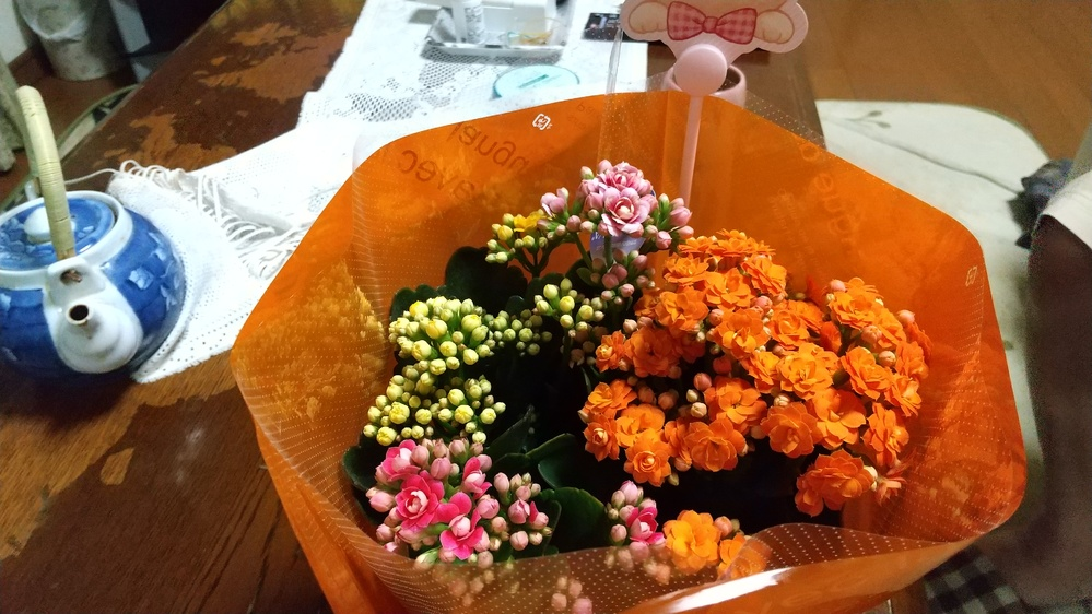 母の日にこの花を買いました、この花、薔薇咲きのカランコエかなーと思うのですが、正解教えて下さいm(_ _)m
