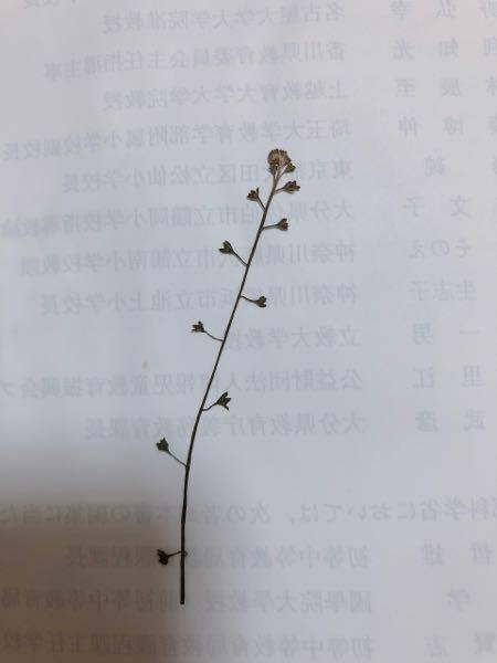 これなんという植物かわかる方いらっしゃいますか?
