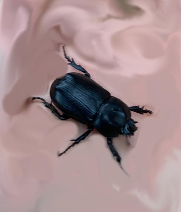この虫はクワガタではないですか?名前を教えてください。 指紋をぼかすために少しその虫の足もぼやけてしまって、わかりづらいと思いますが、わかる程度でいいので、お願います。