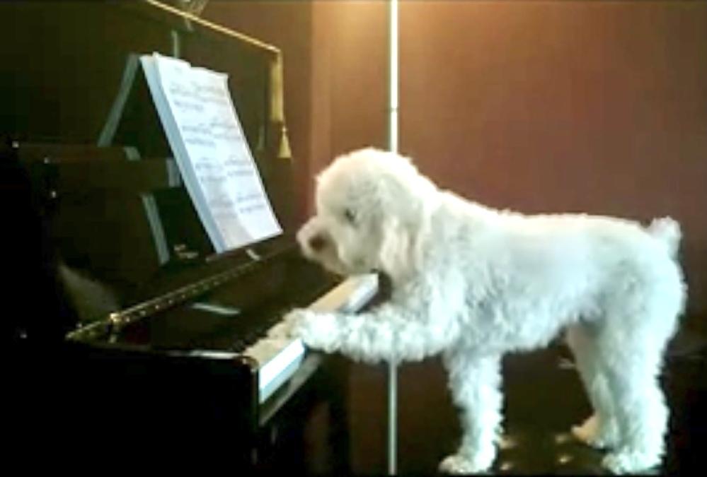 ピアノから白犬を除くと、どうなる?