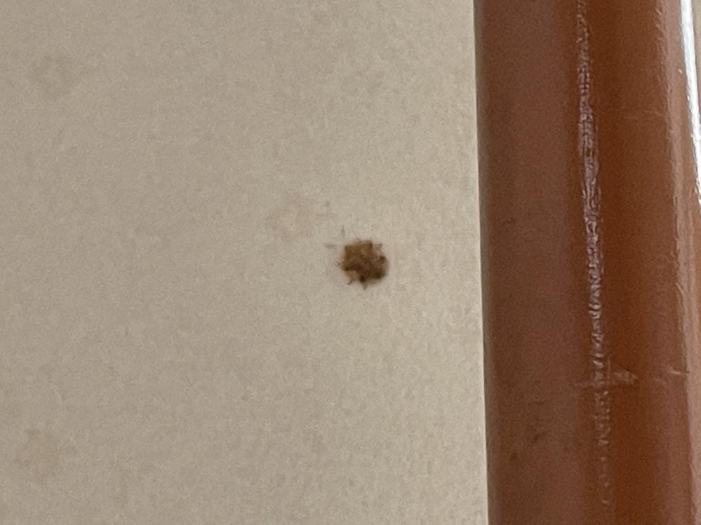 これ何の虫か分かりますか?