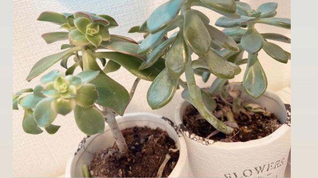 画像の植物の名前が分かりません。 ご存知の方いらっしゃいますか?