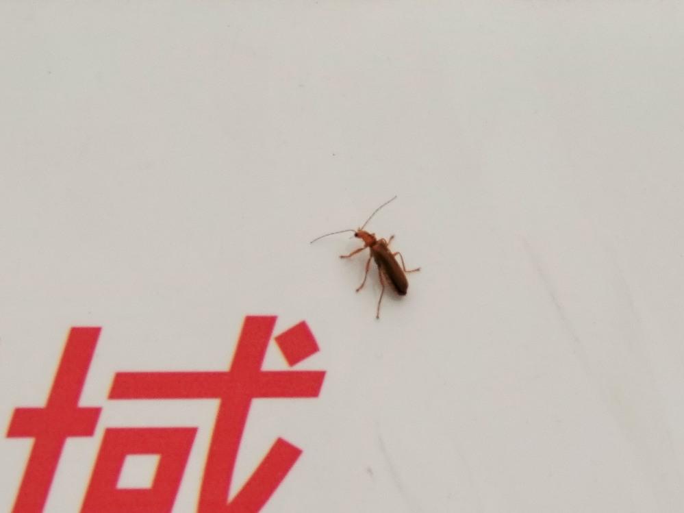 この昆虫は何ですか?