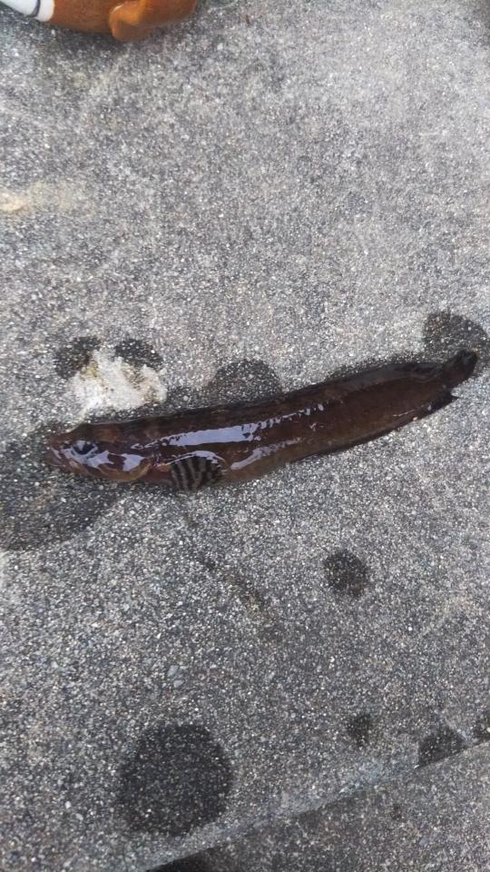 この魚どちら様?