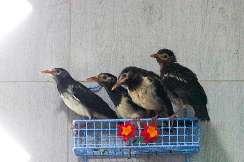 写真の鳥の種類は何ですか? セキレイの種類かなと思ったのですが、何か柄が違う様な気もします。