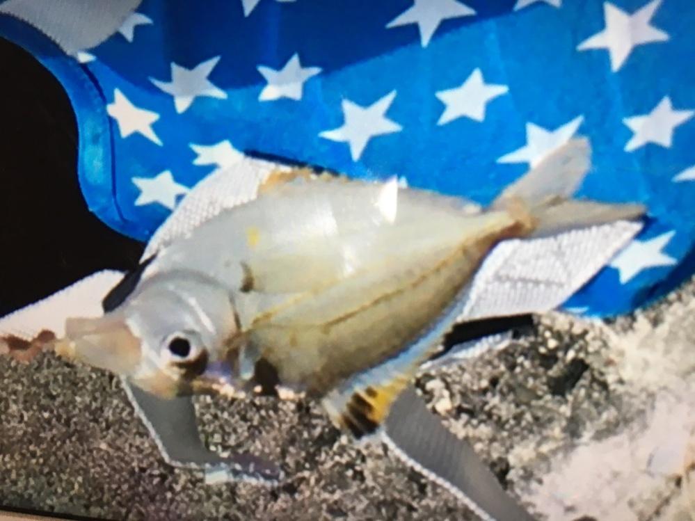 この魚の名前を教えて頂きたいです。 よろしくお願いします。