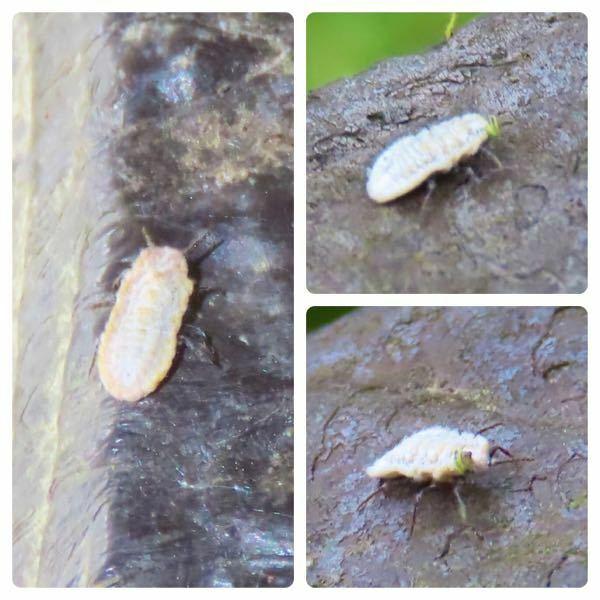 昆虫の種類 写真の昆虫について 種類が分かる方、ご教示ください。 昨日福岡県で撮影したものです。 左側一枚だけ別個体となります。