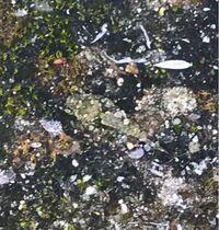 バッタの種類 写真のバッタについて 種類が分かる方、ご教示ください。  本日佐賀県で撮影したものです。 よく擬態しており、画質も荒いので分かりにくいと思いますが画面中央にいます。 ヒシバッタでしょうか。