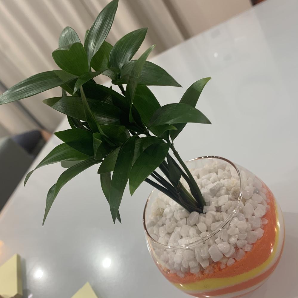 この観葉植物の名前を教えて下さい。