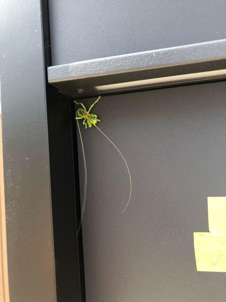 昆虫に詳しい方 この虫はなんでしょうか。 1日ポストにしがみついていました。