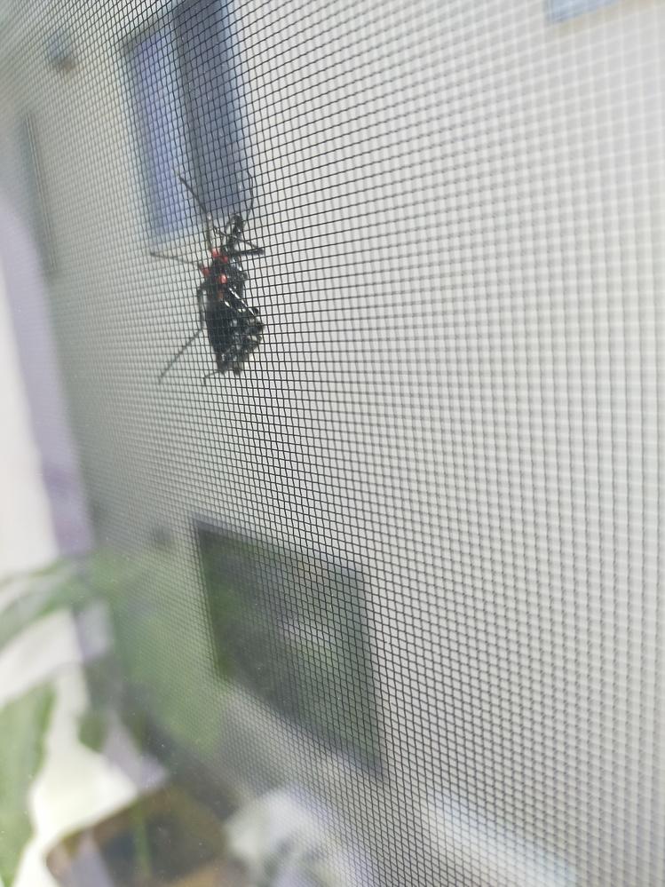 これなんの虫かわかる方いますか??(泣) 足の付け根が赤くて、背中がしましま?で、口に管みたいなのがあります。 2~3cmくらい 窓の内側からしか見えずよくわかりません。。
