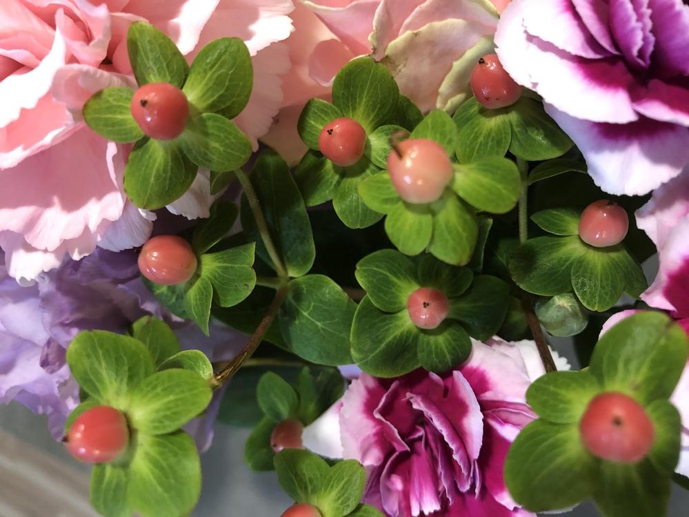 このピンクの玉みたいな植物の名前が知りたいです。 調べてみたのですが分かりませんでした( ; ; )