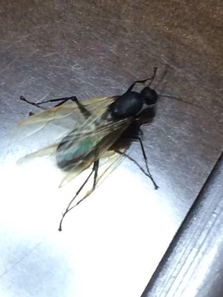 この虫ってなんて名前なのでしょうか? また無害か有害かも教えてください!