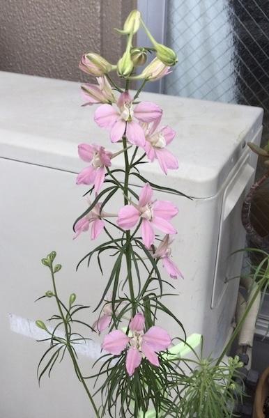 この花の名前わかりますか? よろしくお願いします。