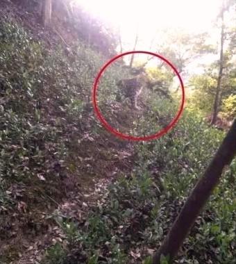 (yahoo.ニュース) 中国の動物園でヒョウ3頭脱走、住民遭遇まで公表せず。 https://news.yahoo.co.jp/articles/df50af9b5746a6535e923a8153ce6d04f9f4bc59 中国浙江省杭州の動物園で4月にヒョウが3頭脱走したのに、20日間近く公表されていなかったことが分かった。地元の住民から「ヒョウに遭遇した」と通報を受けてから動物園側が脱走を認めたことから、市民からは、「ひどい隠蔽だ」と関係者の処分を求める声が広がっている。 . 新型コロナも隠蔽がバレたが、これも酷すぎだろうが? 日本で逃げたペットのヘビが、呆れてるんじゃないか?