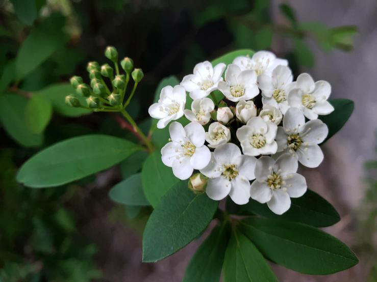 この植物の名前が知りたいです