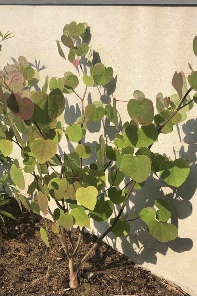 この植物の名前は何ですか? 葉っぱのつき方が可愛いです。ご存知の方お願いします。