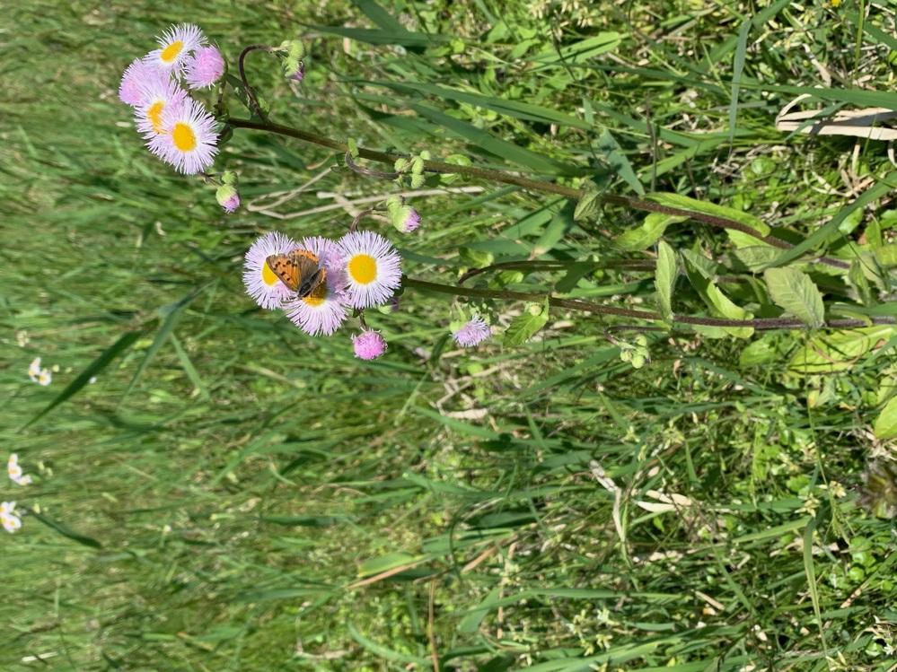 この花の名前を教えて頂きたいです。 よろしくお願い致します。
