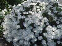 道端に咲いていた花の名前を教えてください