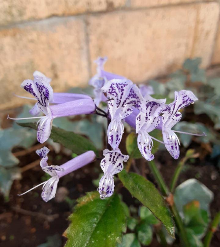 この花はなんという花ですか?