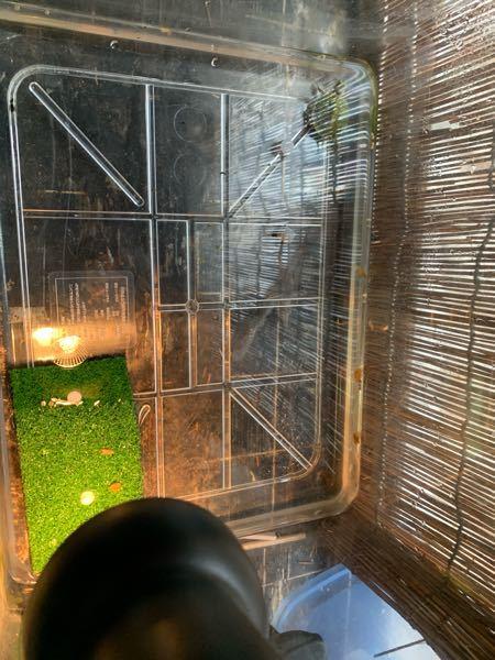 亀の飼育 亀の飼育初めてなのですが、こんな感じでいいのでしょうか。