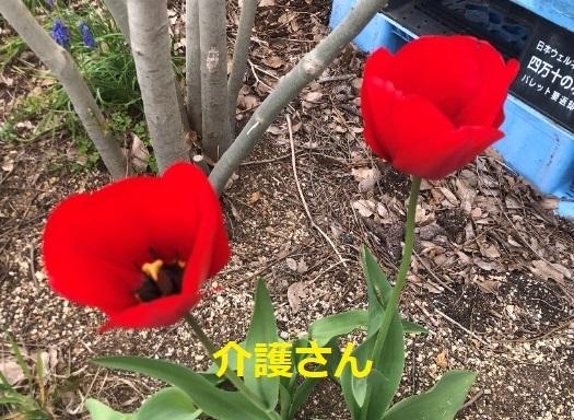 この花の名前は何ですか? 撮影日時は2021年4月3日、撮影場所は兵庫県です。 よろしくお願いします。