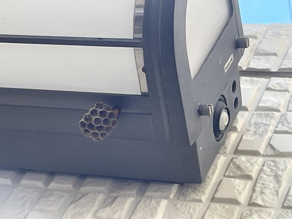 家のドアの真横の蜂の巣ができ始めているのを発見しました! なんのハチかわかりますか?