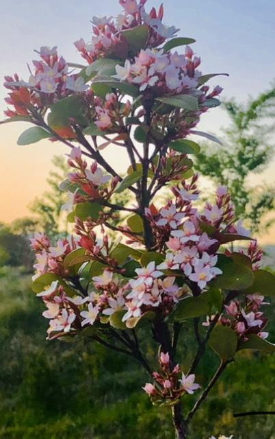 すみません、こちらのお花の名前をご存知の方がおられましたら教えて頂けますでしょうか。 どうぞ宜しくお願い致します。
