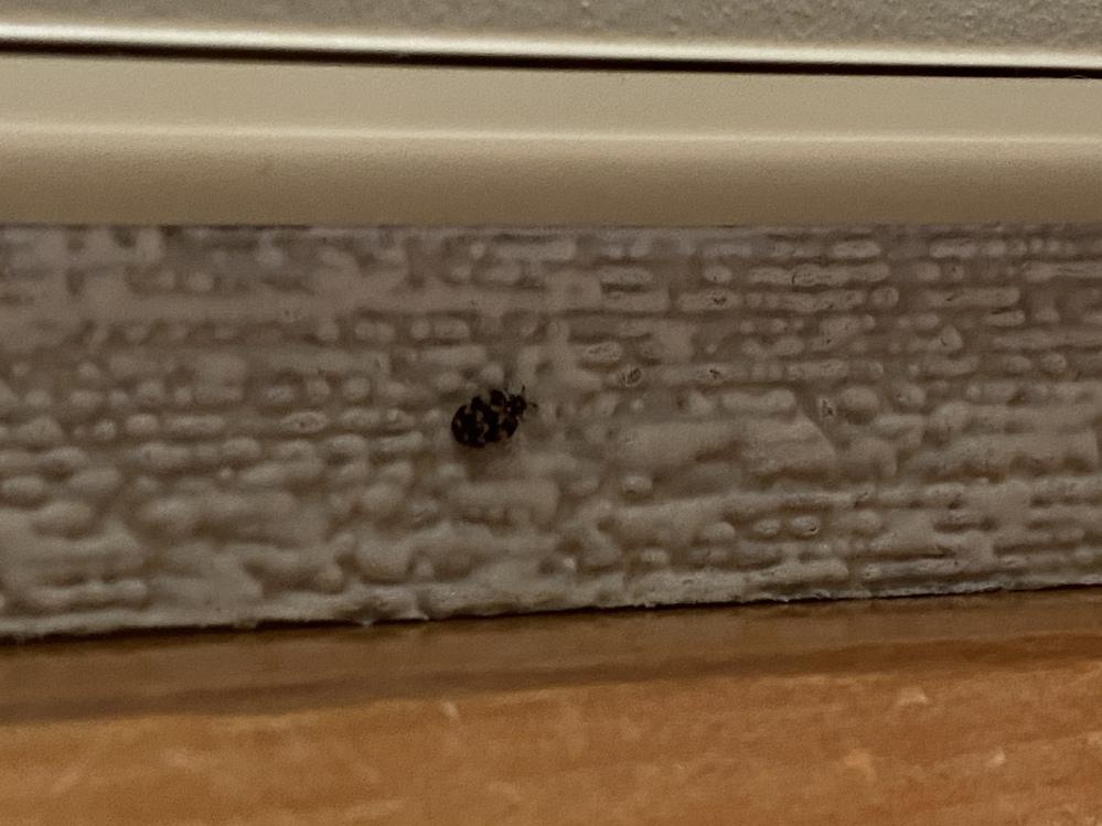この虫、わかる方いらっしゃいますかー?家の中に居て0.5cmもないくらいです!