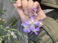 この植物の名称わかる方いますか?