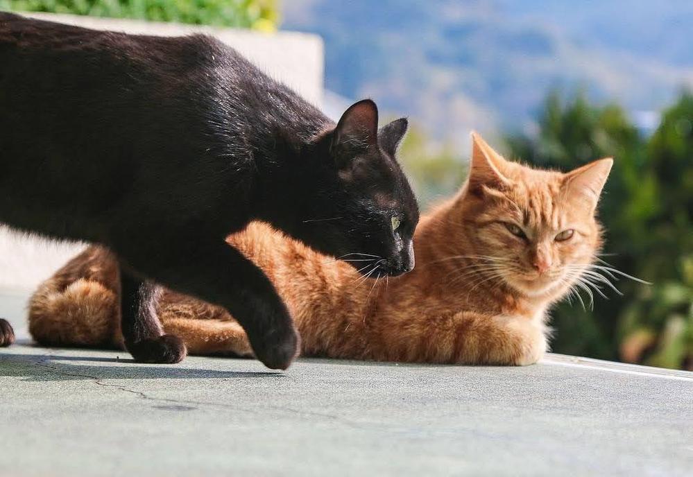 【大喜利】 黒猫が横切ると何が起きますか?推理してください。