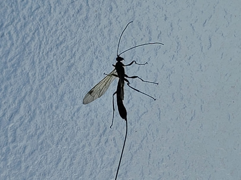 窓の所にいたこの虫はなんなのでしょうか?蟻のように見えるのですが調べてもよくわかりませんでした。気になっています