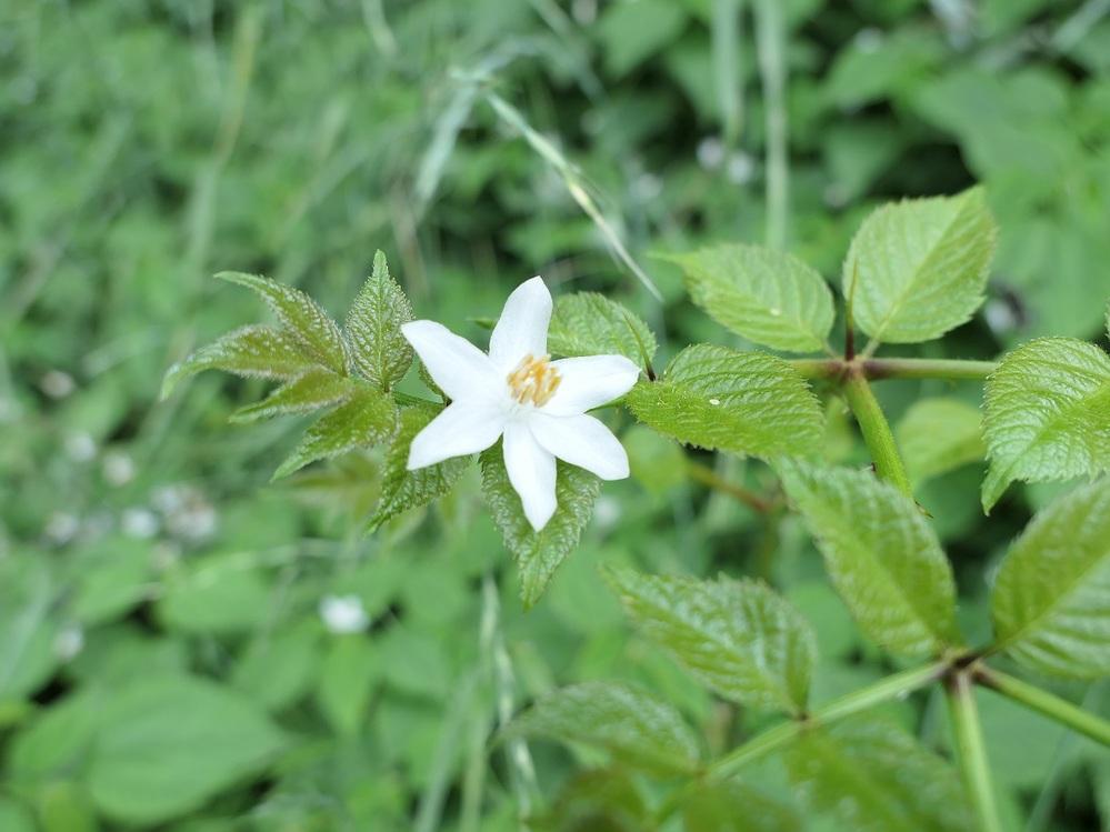 花の名前を教えて下さい。<(_ _)> 埼玉西部です。 ご回答のほど、宜しくお願い致します。<(_ _)>