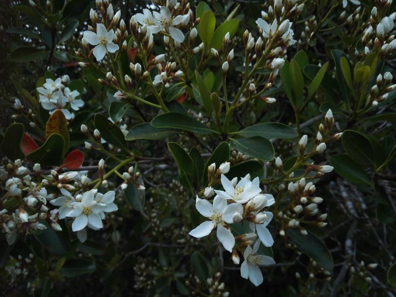 この花分かる方教えてください。 3mほどある葉が茂った木です。