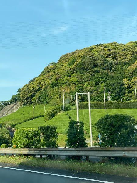 東名道路上りを走ってるときに、焼津周辺で見かけたのですが、これは茶畑でしょうか?