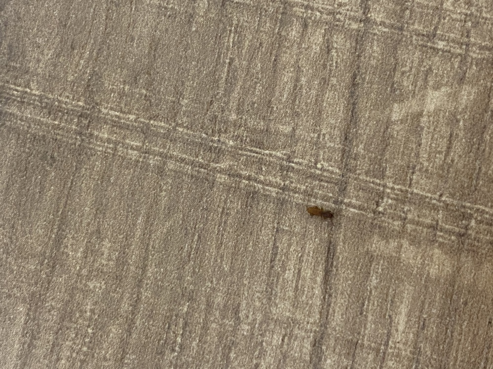 何の虫かわかりますか? 2ミリくらいです。