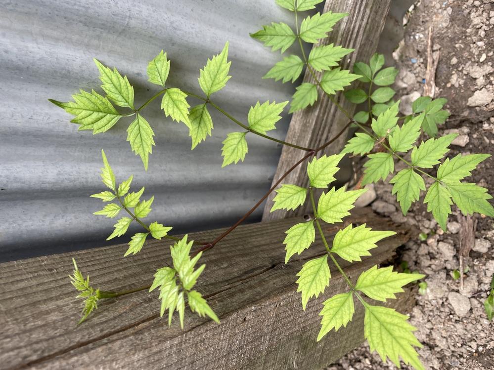 この植物の名前教えてください!