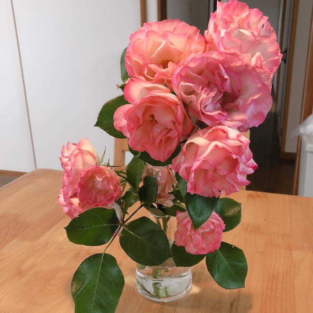 バラの挿し木について 園芸未経験者です。 散歩をしている途中、庭木の剪定をしていたご婦人からとても綺麗なバラの花をいただきました。家では花瓶に入れて飾っています。 その方から挿し木をするといい...