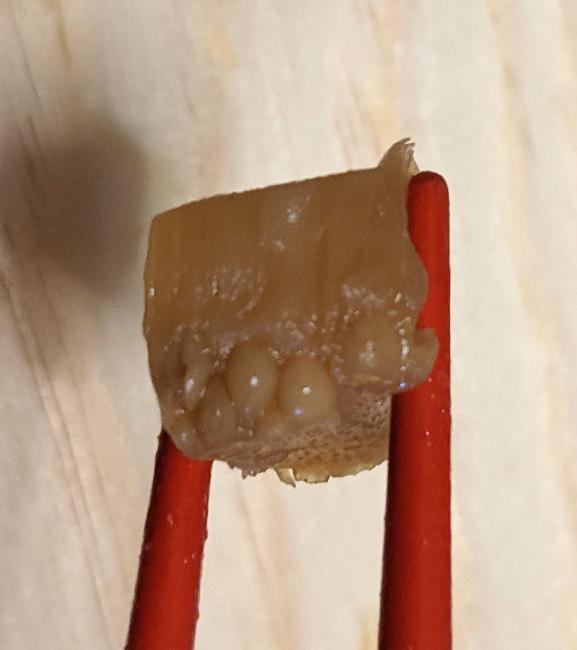 崎陽軒のお弁当の筍煮に奇形?が混ざってました。 これってなんですかね? どうしてこうなるのでしょうか?