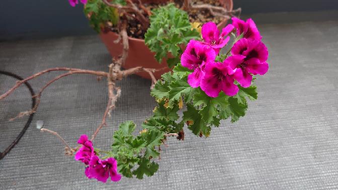 このお花の名前を教えてください。