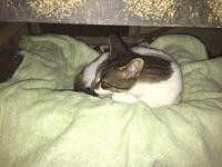 野良猫ちゃんらしき子猫が我が家に遊びに来ました。 首輪はなくガリガリですが毛並みは綺麗で人懐っこい性格です。先程、キャット用フードを与え水も飲みました。直ぐにでも我が家に迎え入れたかったのですが、我が家には小型犬4匹がいます。とりあえず、縁側の下に雨よけをしてベッドを置きました。すると直ぐにベッドに入り毛づくろいをはじめ気持ちよさそうにゴロゴロないてました。ワンコを近くに連れて行ったところ(...