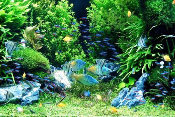 写真の中で泳いでいる魚の名前を全て教えてくれるとありがたいです