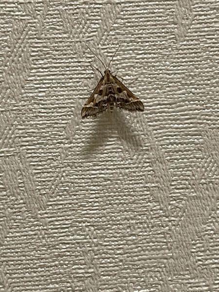 この虫の名前をおしえてください
