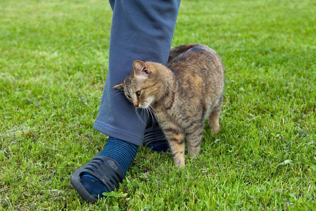猫が足元にやってきて、 頭をすりすりと足にこすりつけてくる時は、 どういう感情の時なのでしょうか?