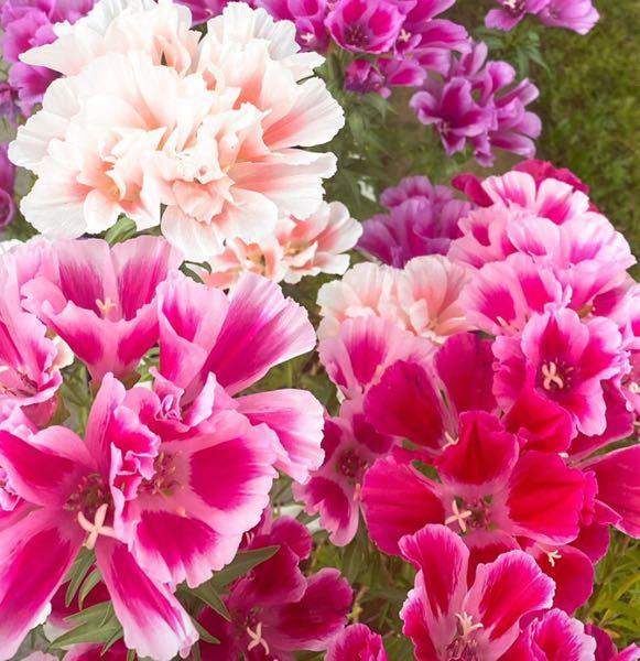 これってなんて言う名前の花ですか?