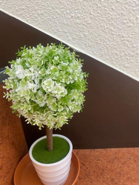 最近観葉植物を買おうかと思っています。 初心者におすすめの観葉植物や育てやすい、虫がよりにくい観葉植物はありますか? それと、今日この観葉植物?を見つけました。 可愛くて写真を撮ったのですが、この花?木?の名前がわかりません。よければ教えて頂きたいです。 よろしくお願いします。
