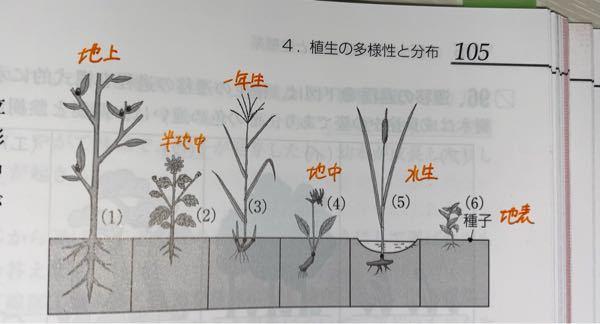 字汚くてすみません。 それぞれ地上植物、半地中植物、一年生植物、地中植物、水生植物、地表植物であっていますか?