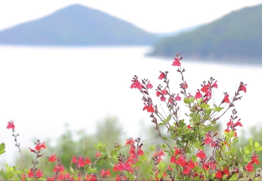 この赤い花は何という花かわかりますか?